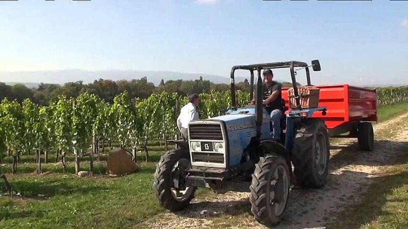 Video link: Weinlese 2014 bei Uvavins   Von der Rebe bis zum Kunden HD